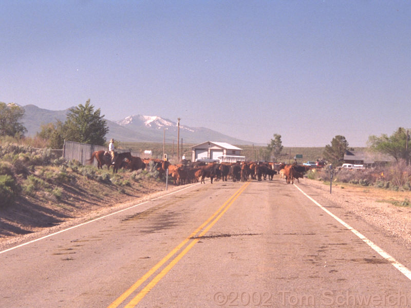 Traffic jam in Jiggs, Nevada.
