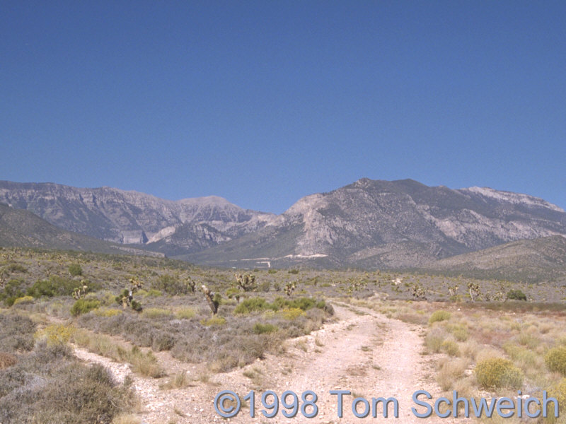 Mt Charleston in the Spring Mountains, Nevada.