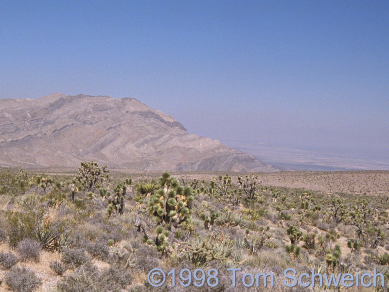 The Mesquite Mountains seen from the vicinity of Keany Pass.