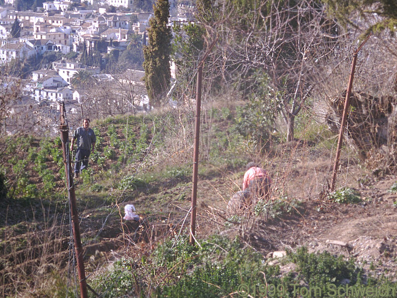 Gardeners on the slopes below La Alhambra.