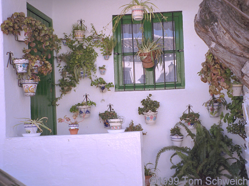 Plants on a porch in Grazalema.