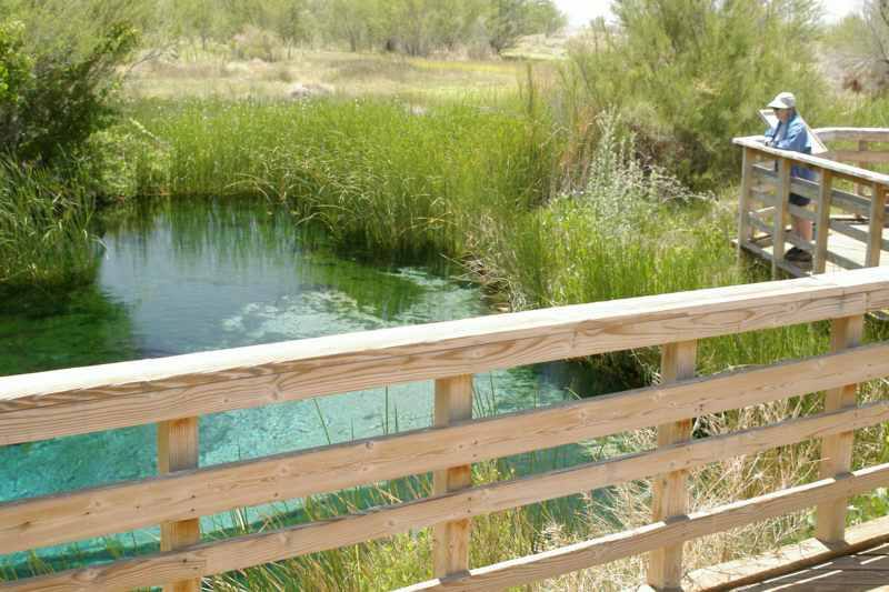 Crystal Spring at Ash Meadows NWR.