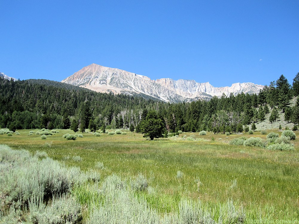 California, Mono County, Upper Horse Meadow