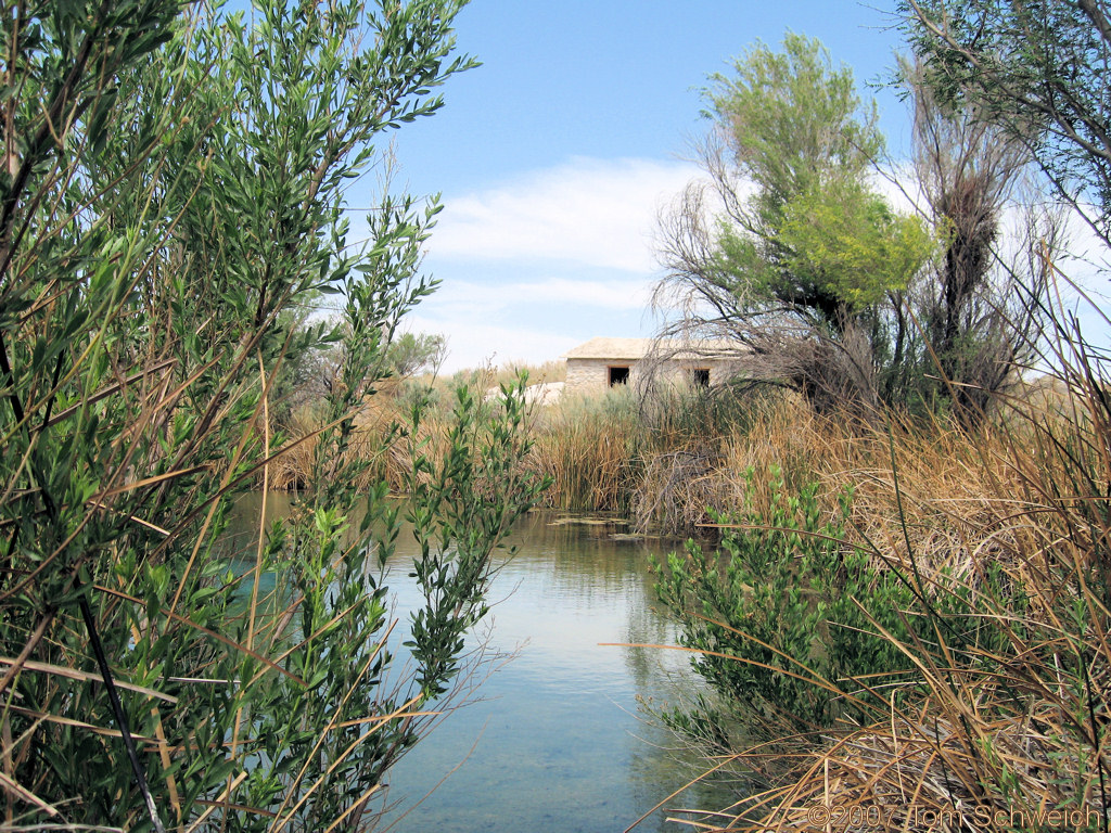 Longstreet Spring, Ash Meadows National Wildlife Refuge, Nye County, Nevada