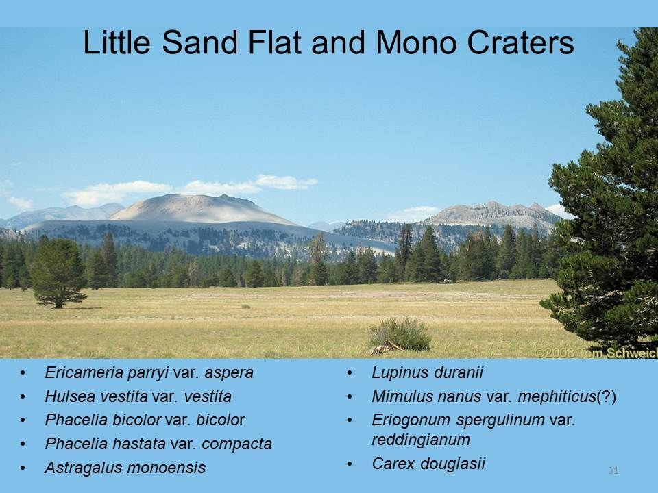 California, Mono County, Little Sand Flat