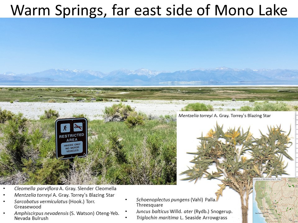 California, Mono County, Warm Springs